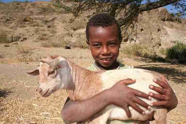 Ethiopian Boy Goat
