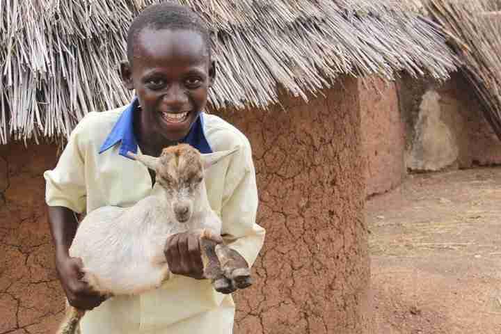 Boy Goat Ghana