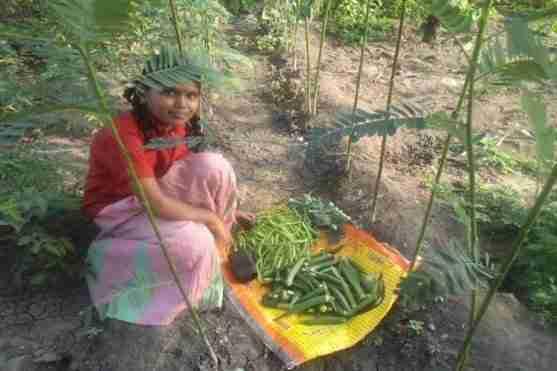 Bio-intensive garden in India