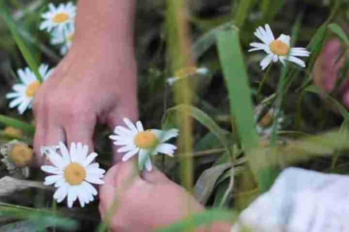 Flower in children hands