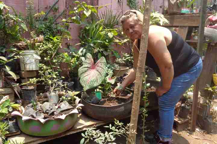 Woman tends her garden